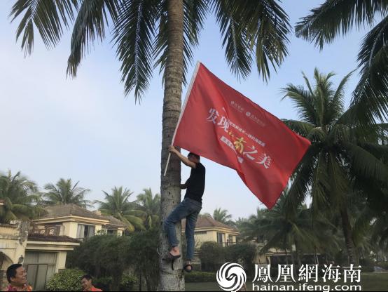 发现海南之美小伙伴体验爬树摘椰子