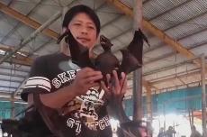 新型冠状病毒蔓延 蝙蝠餐在印尼依旧热卖