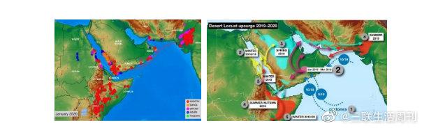蝗災預警: 4000億只蝗蟲已到達印度和巴基斯坦