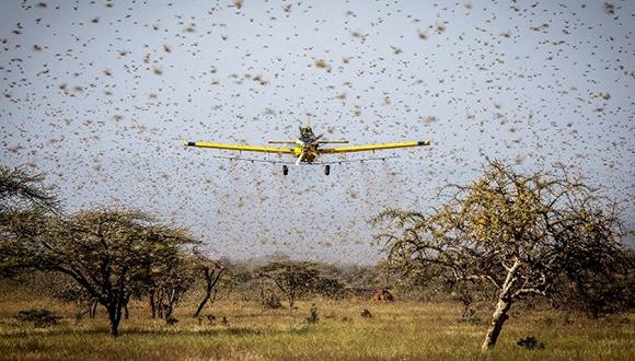 飞科电吹风吃掉几亿人粮食的蝗灾怎么来的?连印巴都坐下来好好说
