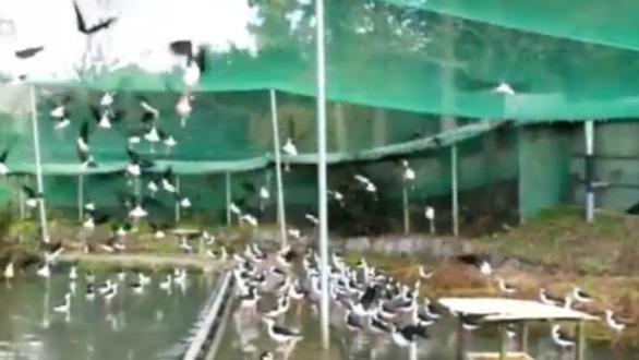 震撼!上村淳之的园子中竟有上百种禽鸟!