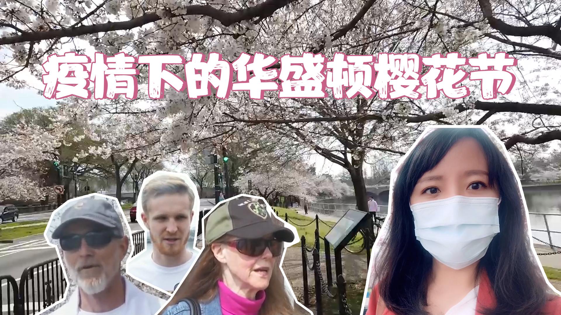 直击疫情爆发下的美国樱花节 戴口罩?不存在的!
