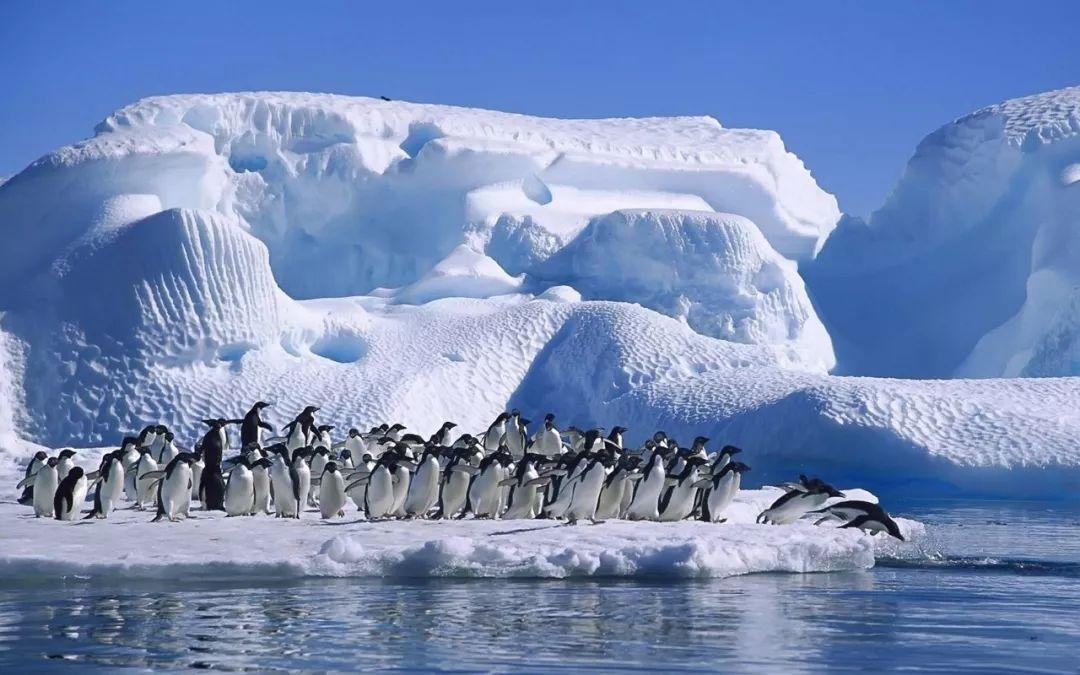 """至今未被""""攻陷"""" 南极会免遭新冠肺炎的侵袭吗?"""