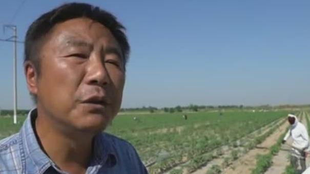 乌兹别克斯坦听取中国专家建议 运用膜下滴灌技术