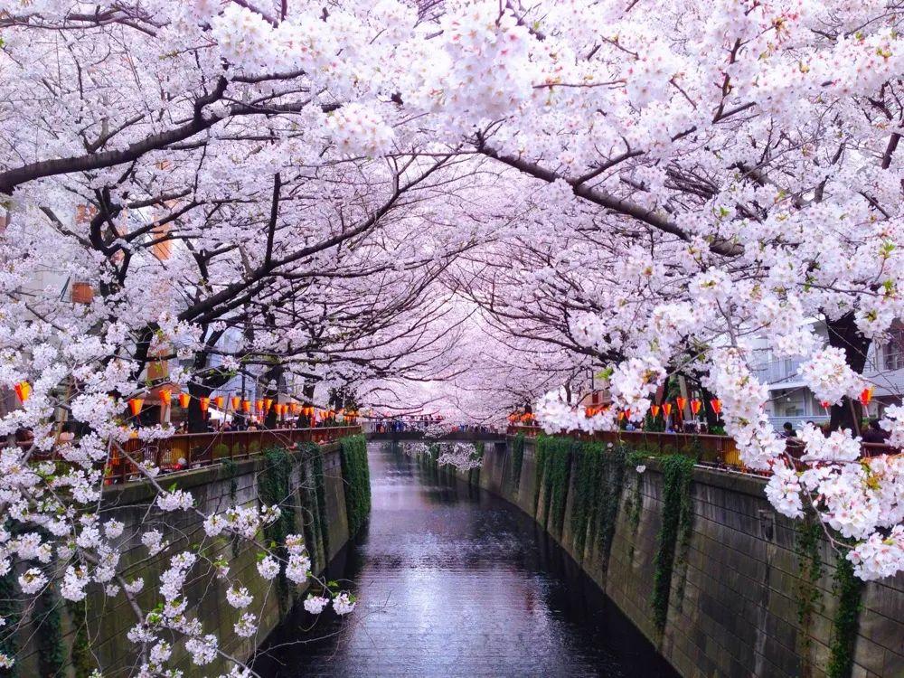 """日本""""樱花经济""""惨淡,旅游业收入下降九成,安倍将宣布史上最大刺激措施"""