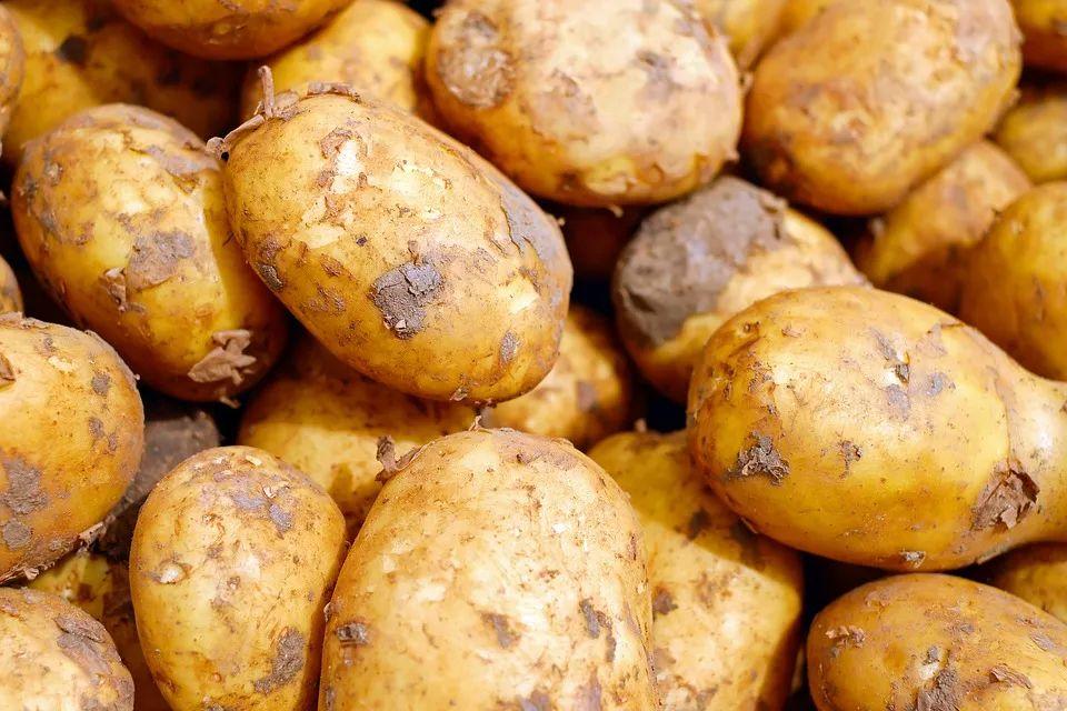 我发现了一个秘密:管土豆叫洋芋的地儿都好吃哭了