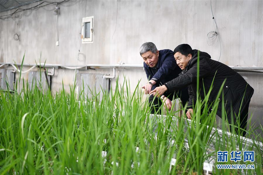 """(在习近平新时代中国特色社会主义思想指引下——新时代新作为新篇章·习近平总书记关切事·图文互动)(4)让农民挑上""""金扁担""""——国际现代化的生动实践扫描"""
