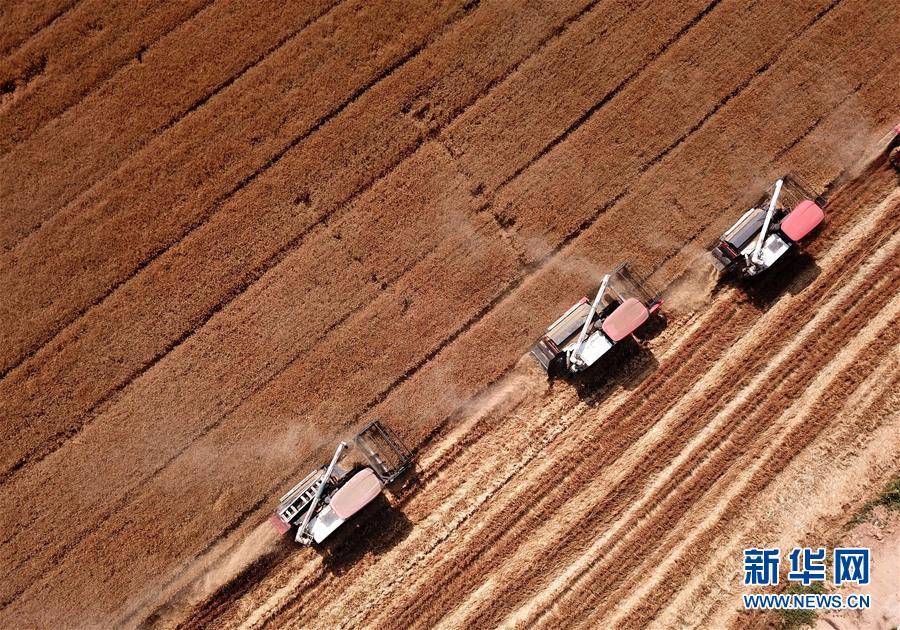 (新华全媒头条·图文互动)(3)不寻常的耕耘,不一般的收获——我国夏粮主产区夏收观察