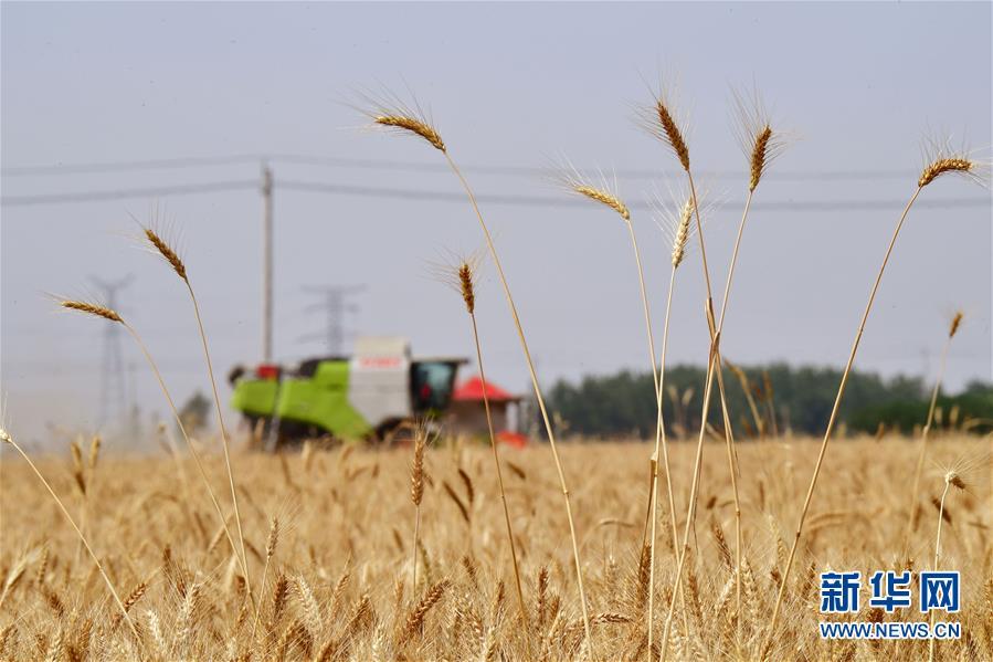 (新华全媒头条·图文互动)(7)不寻常的耕耘,不一般的收获——我国夏粮主产区夏收观察