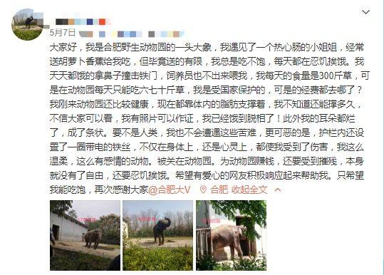 【程雪柔公交车优化课程】_安徽合肥一动物园大象遭虐待瘦成皮包骨?园方回应