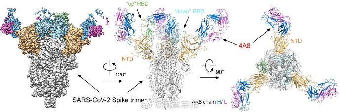 陳薇團隊:新冠病毒抗體研究取得重大突破