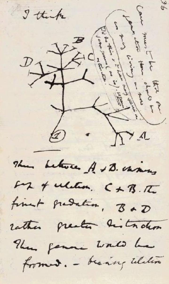 《物种起源》(1859年)的原始手稿,以及笔记本B里标志性的速写图,共同展示了进化树的原型,为达尔文的自然选择理论打下了基础。