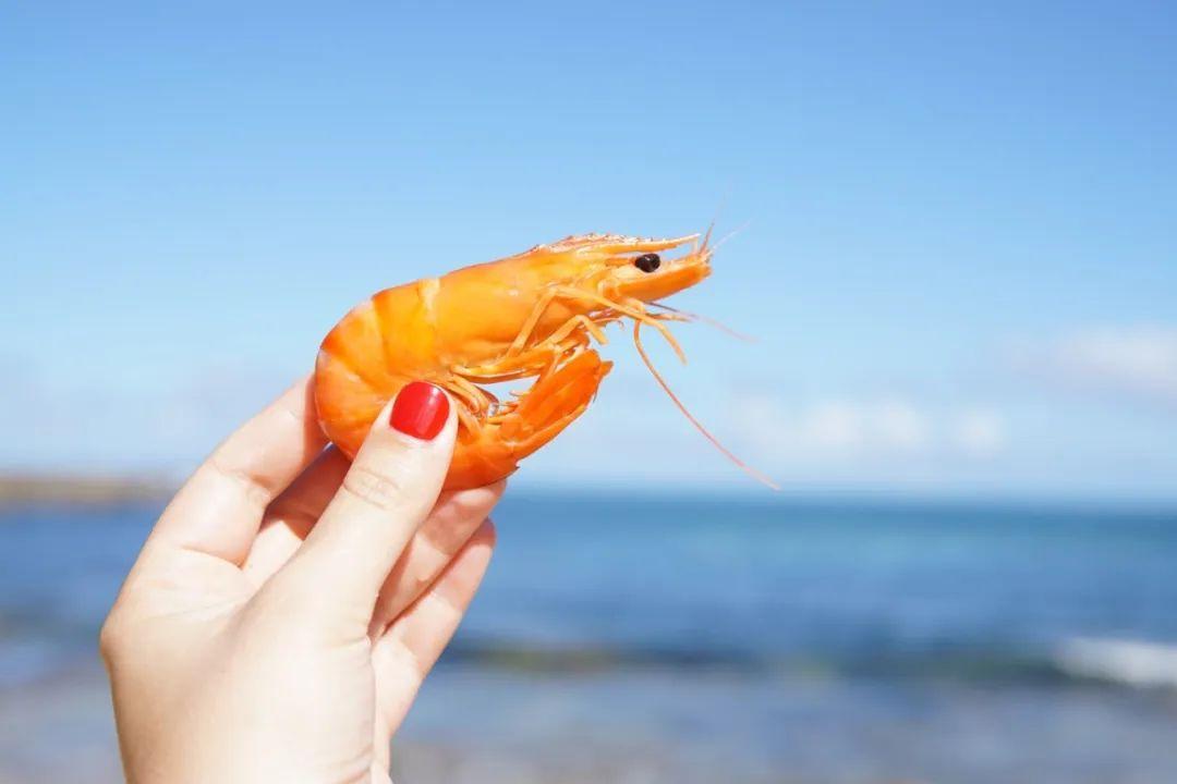 【长沙网站优化培训】_厄瓜多尔虾外包装检出新冠,进口冷链食品还能吃么?如何确保安全