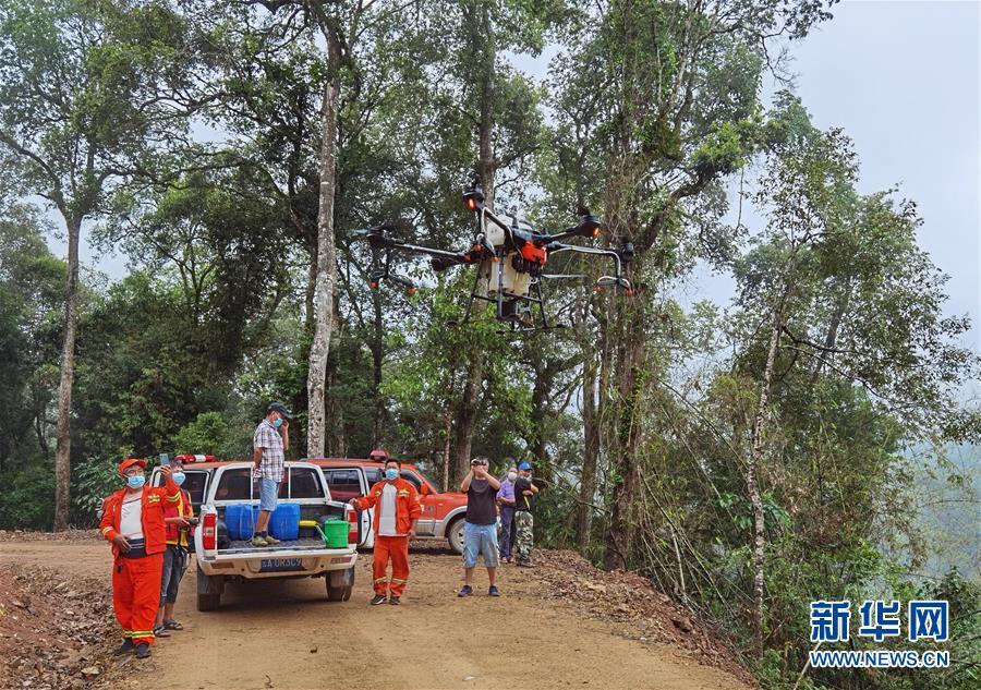 云南普洱、西双版纳局部发生蝗灾 目前处于可控范围