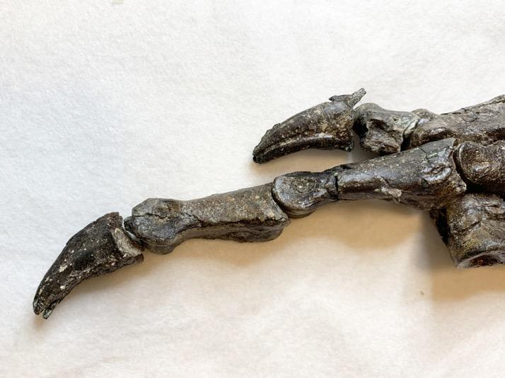 【网站推广技巧】_巴西发现新品种恐龙与中国新疆左龙有亲缘关系