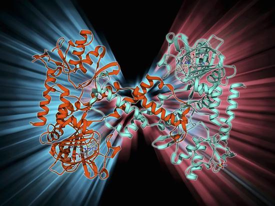 作为表观遗传的一种机制,DNA甲基化可以调控基因的表达,而不改变基因序列。 来源:LAGUNA DESIGN / Getty