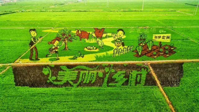 """【搜索引擎制作】_东北农民在稻田作画,""""种""""出哪吒、憨豆等形象,年收入500多万"""
