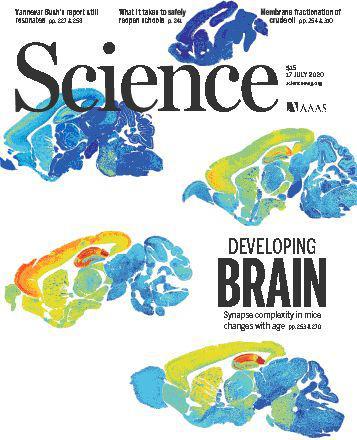 大脑突触图谱诞生!或能解释衰老为何导致智力变化