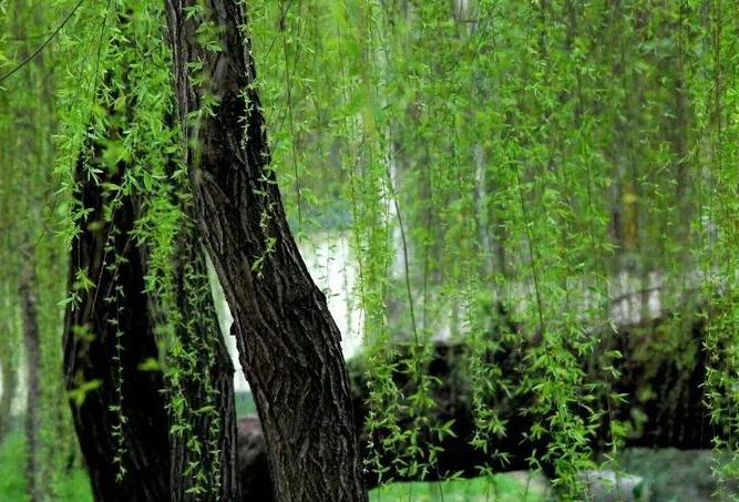 《【摩登平台app登录】这个低调小城,竟藏有媲美长江三峡的景观,而且还是避暑宝地!此生定要去一次!》
