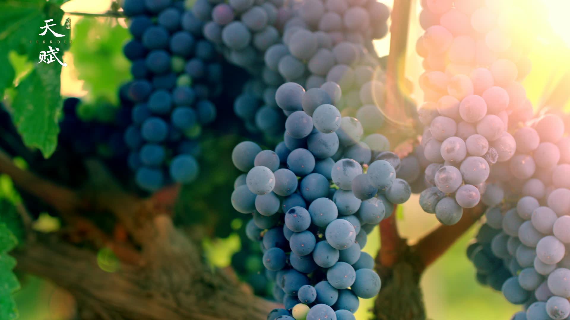 长城天赋葡萄酒