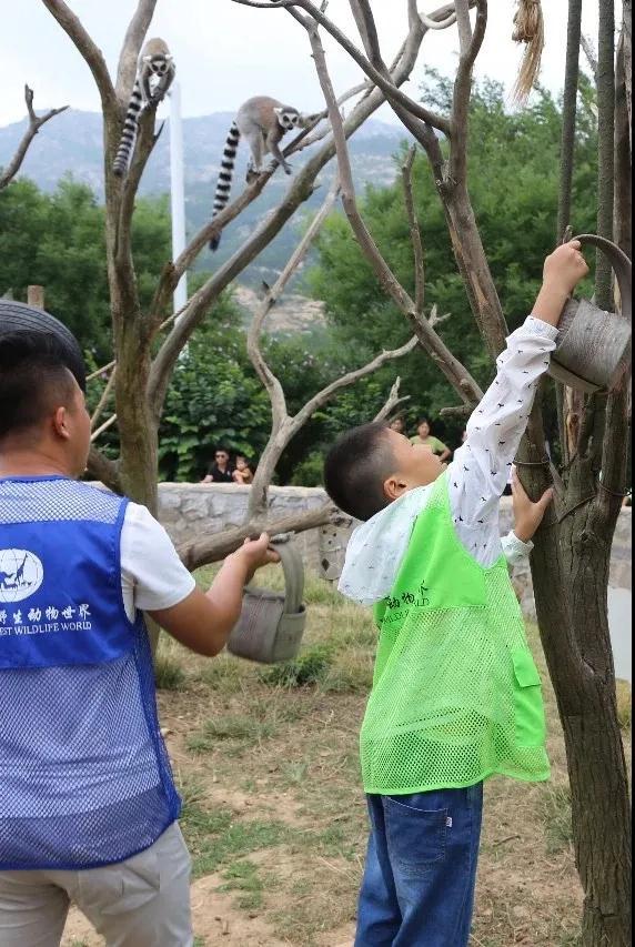 青岛森林野生动物世界幕后之旅研学营 |这里藏着不一样的暑假