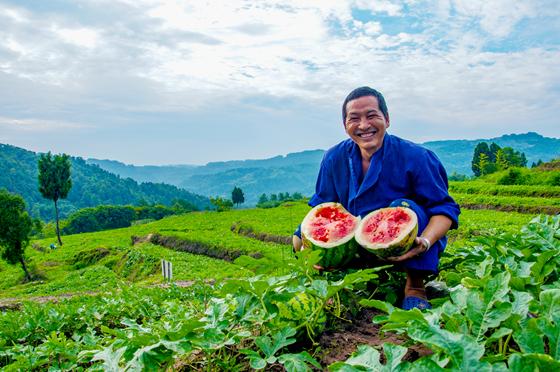 鼓楼寨种植专业合作社负责人陈本杰展示种植的西瓜。李在华 摄