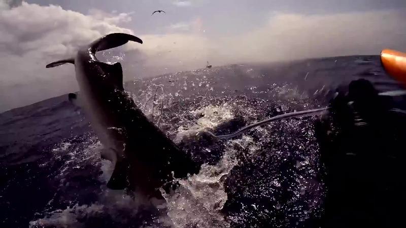 """实拍潜水员和鲨鱼群的""""护食大战"""" 最后发现还是人类更凶残"""