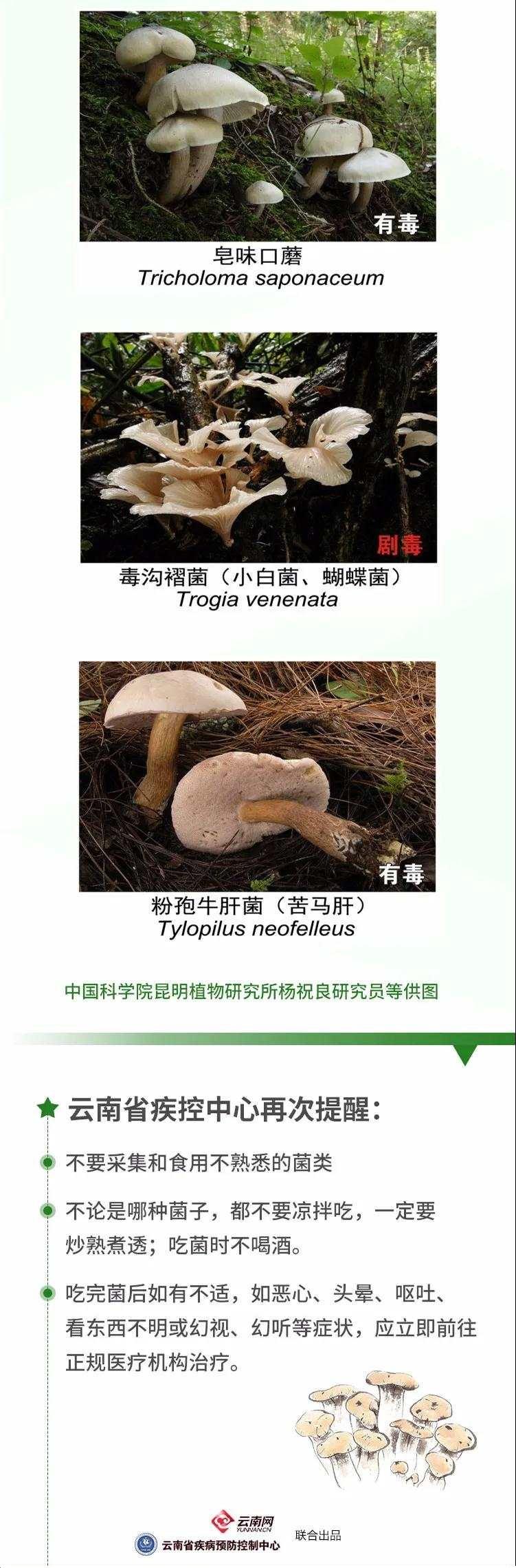 云南今年来野生菌中毒已致12死,这份吃菌手册请收好!