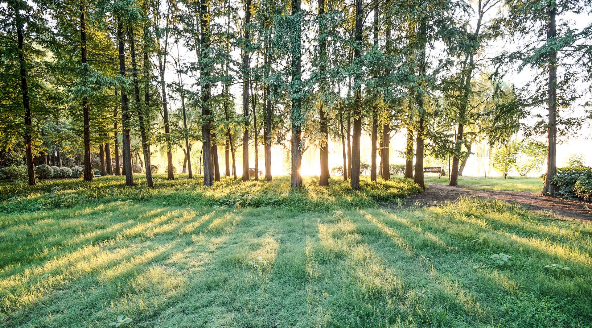 公园 | 绿树成荫 消暑胜地