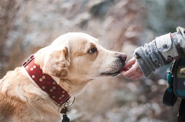 堪比核酸检测!科学家通过嗅探犬识别新冠病毒:成功率高达94%