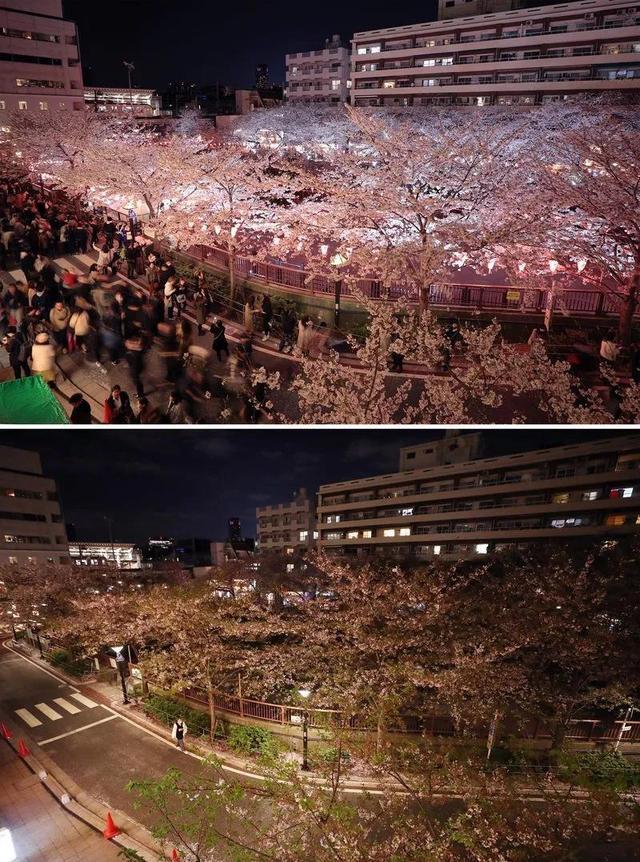 ▲拼版照片显示:(上)2019年4月3日,人们在日本东京欣赏目黑川沿岸的樱花。(下)2020年4月6日,日本东京目黑川沿岸行人稀少。(新华社记者 杜潇逸摄)