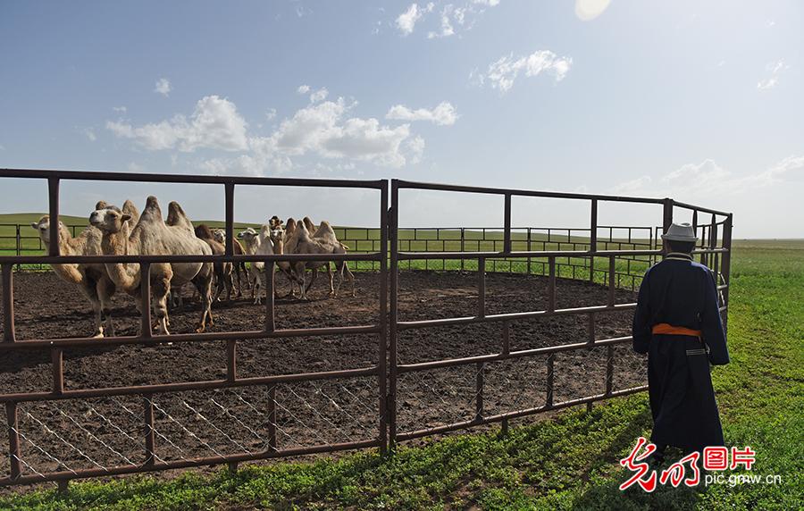 【幸福花开新边疆】草原牧民的现代生活:五畜齐全 人丁兴旺