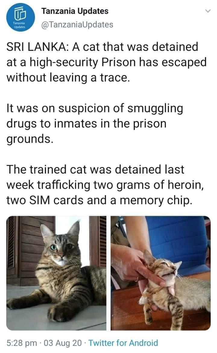 """斯里兰卡""""运毒""""猫""""越狱"""""""