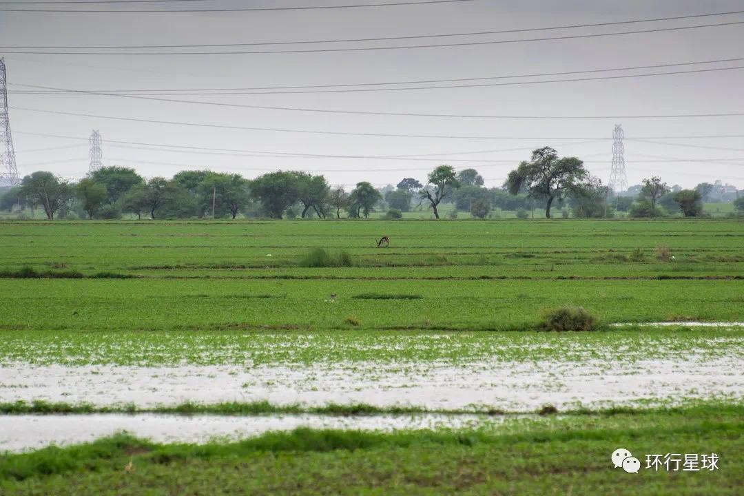 印度乡村 © wphotopro / Shutterstock