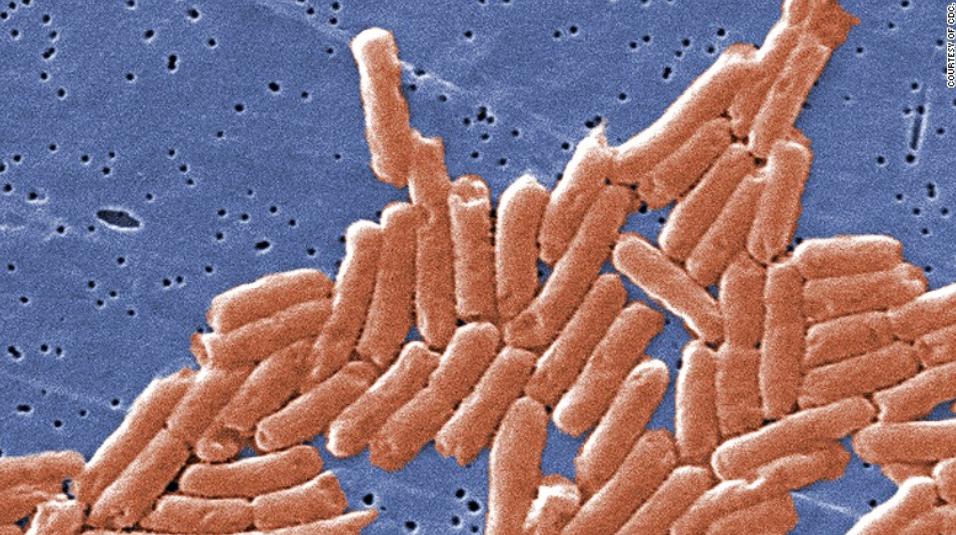 【快猫网址优化报价】_美国沙门氏菌疫情已致43州640人感染 来源或为洋葱