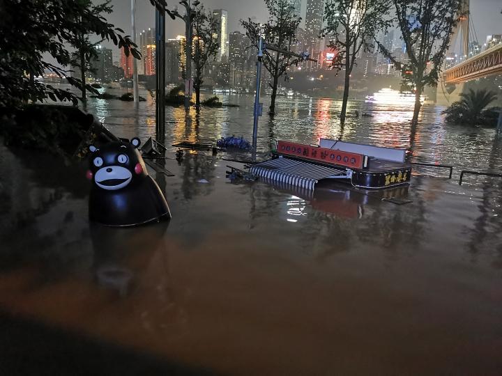 【网站编辑】_洪水中上演奇幻漂流!重庆熊本熊被冲到江边一脸懵