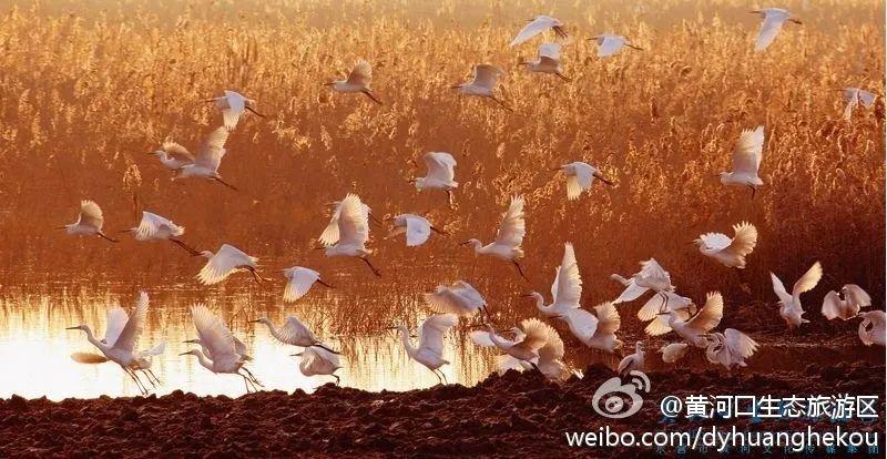圖自/@黃河口生態旅游區