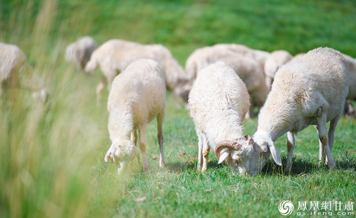 【行吟金昌】月牙湖与牧羊人