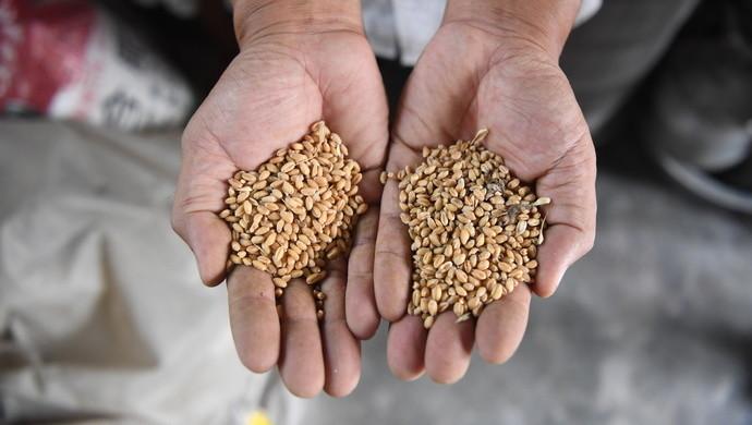 【奏鸣网】_全球一年浪费13亿吨粮食!按人均中国排22位,城市餐饮是重灾区