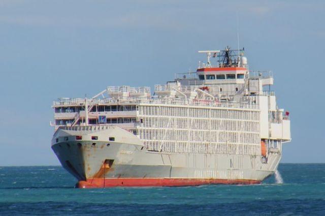 【柳州楼凤验证】_日媒:驶向中国的货船在东海失踪,载有43名船员和5800头牛