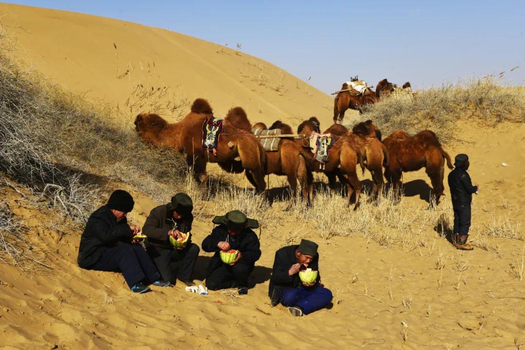 ▲ 吃腰食:驼队行走时间较长,骆驼客要选择合适的地段,休整一下,吃些腰食。图为民勤骆驼客在途中吃腰食休整。2017年10月21日李军拍摄于巴丹吉林沙漠