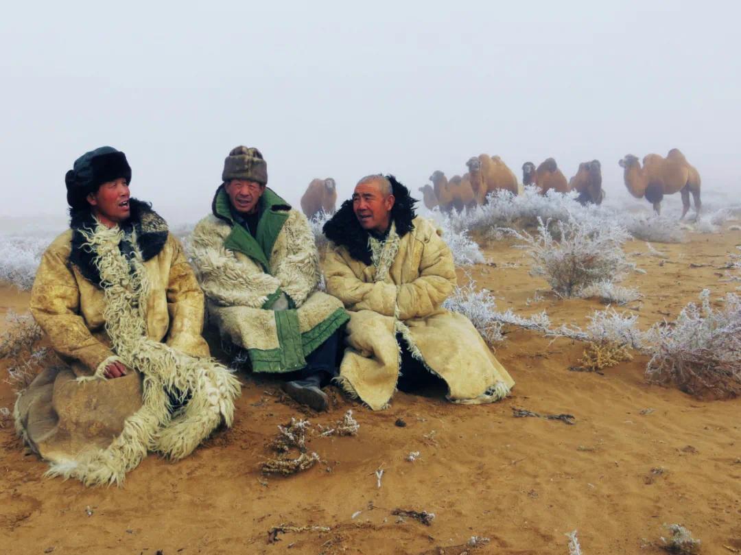 ▲ 民勤骆驼客柳生军、张元生、曹宗让在民勤县北山牧场演唱驼夫号子。李军摄于2015年10月12日