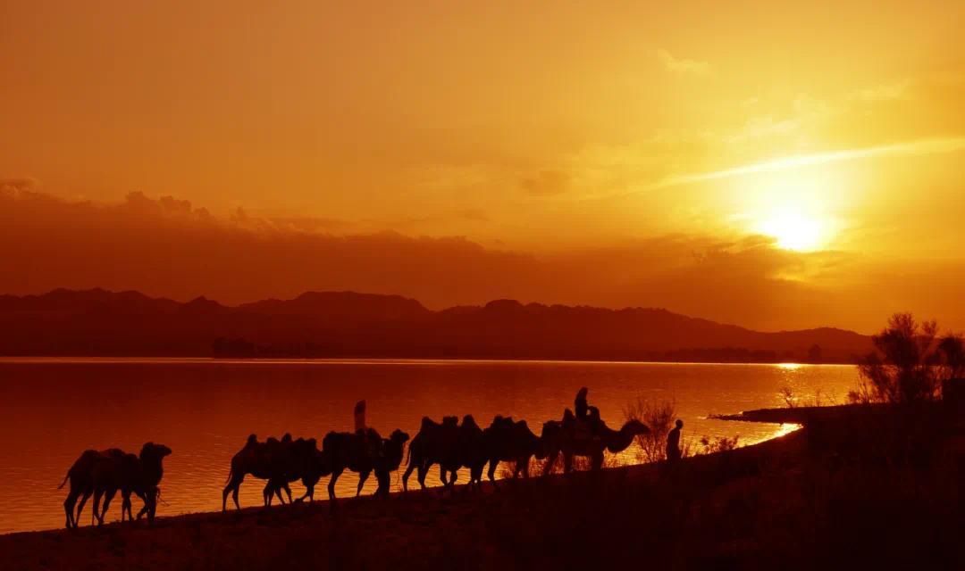 ▲ 图为民勤骆驼客在红崖山水库景区为游客开展骑骆驼体验服务。2011年8月23日李军摄于民勤县红崖山水库景区