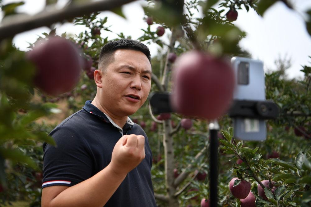 在庄浪县万全镇邵坪村,邵子斌在梯田果园中直播卖苹果(9月3日摄)。新华社记者 范培珅 摄