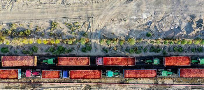 运输车辆载满番茄、排队等待交售。 图自中新网