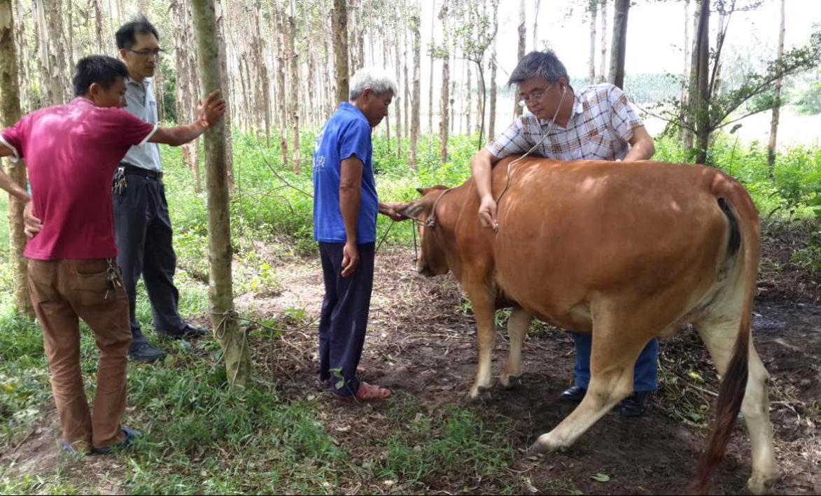 广东海洋大学科技特派员刘铀教授为贫困户诊治病牛