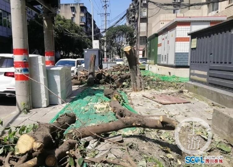 【千牛帮】_中纪委网站批评成都滥伐桂花树,当地三部门紧急整改
