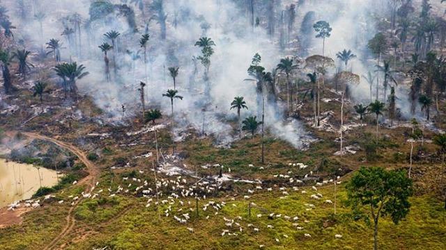 人类50年消灭世界三分之二动植物 粮食生产严重威胁大自然
