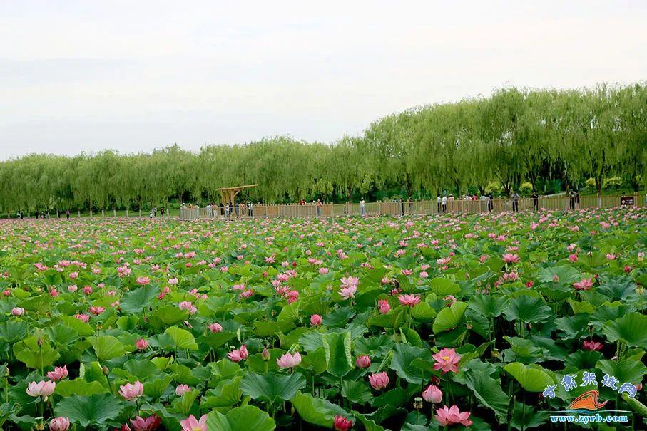 甘州区城北郊的润泉湖公园