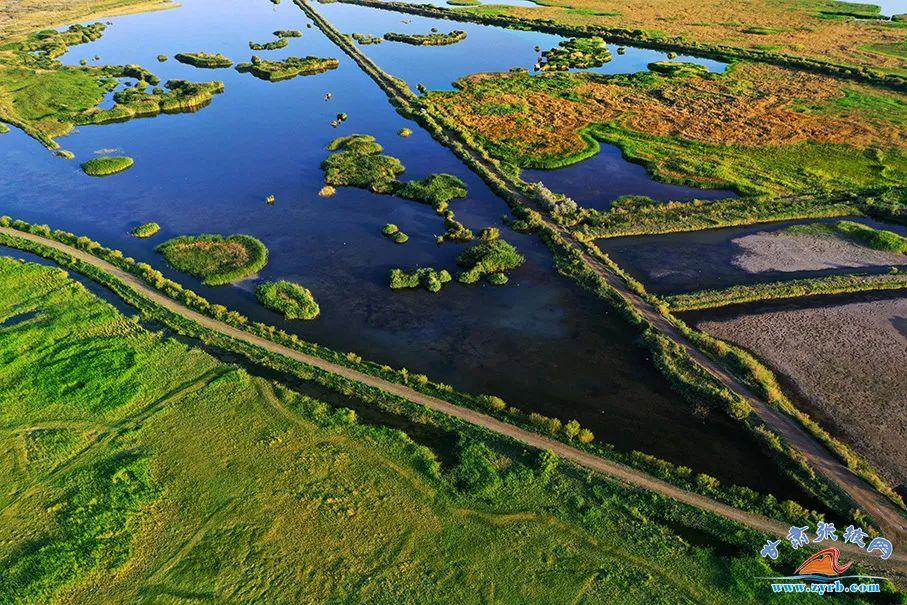 张掖黑河湿地